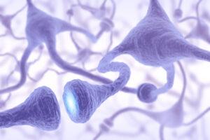 Nous avons des neurones empathiques