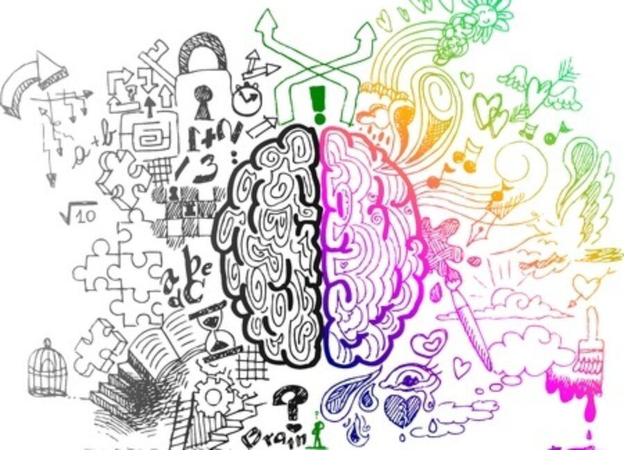 2 Cerveaux